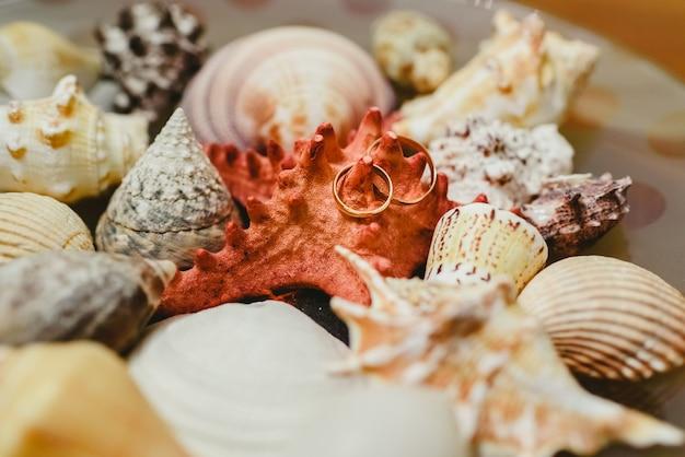 Obrączki ślubne otoczone muszlami, oprawione w morski motyw.