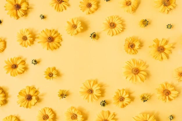 Obramowanie ramki wykonane z żółtych kwiatów daisy na żółtej powierzchni