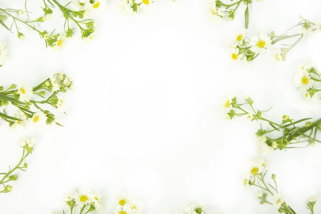 Obramowanie wykonane z białych kwiatów stokrotki