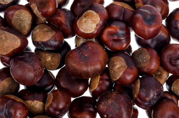 Obrany owoc aesculus na białym tle