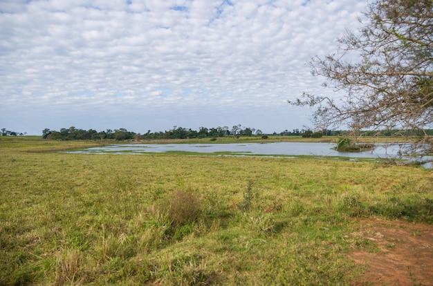 Obraz brazylijskich terenów podmokłych