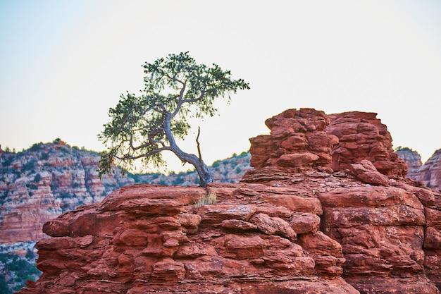 Obraz drzewa szorstkiej sawanny na pomarańczowej skalistej wychodni