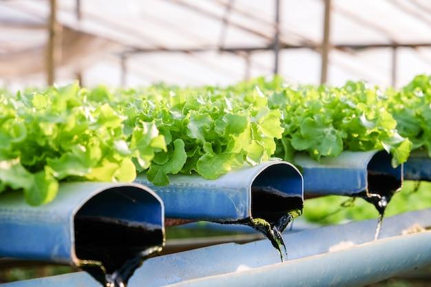 Obraz farmy warzywnej hydroponics
