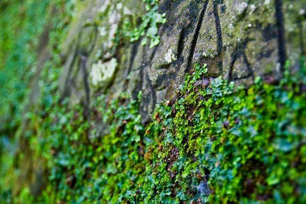 Obraz hardy'ego zielonego mchu rosnącego na skalistym klifie