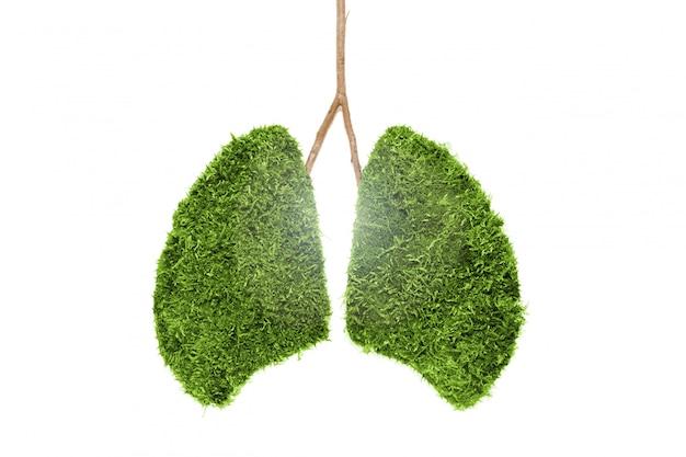 Obraz ludzkich płuc z zielonego mchu. odosobniony