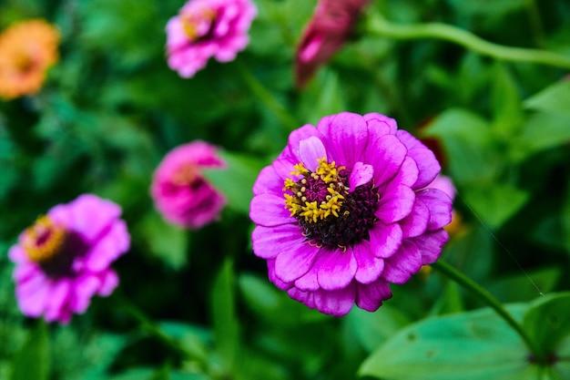 Obraz makro fioletowego kwiatu z kolorowymi kwiatami w tle