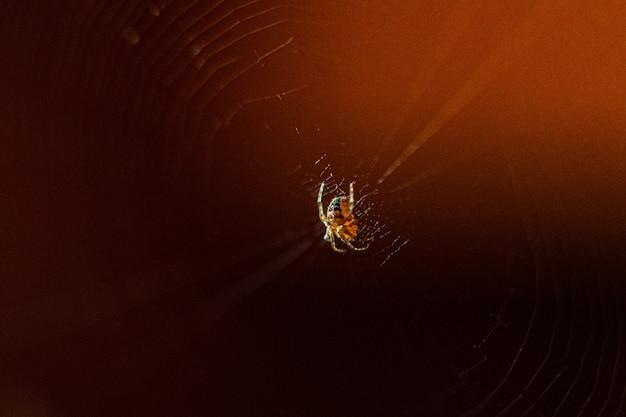 Obraz małego pająka splata sieć na ciemnym brązowym tle rozmycia