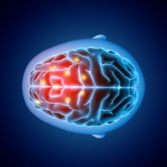 Obraz medyczny 3d pokazujący widok z góry mózgu z podświetlonymi częściami