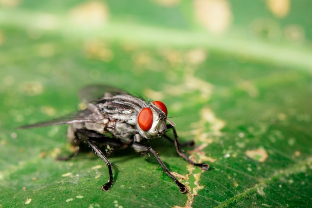 Obraz much (diptera) na zielonych liściach. owad. zwierzę