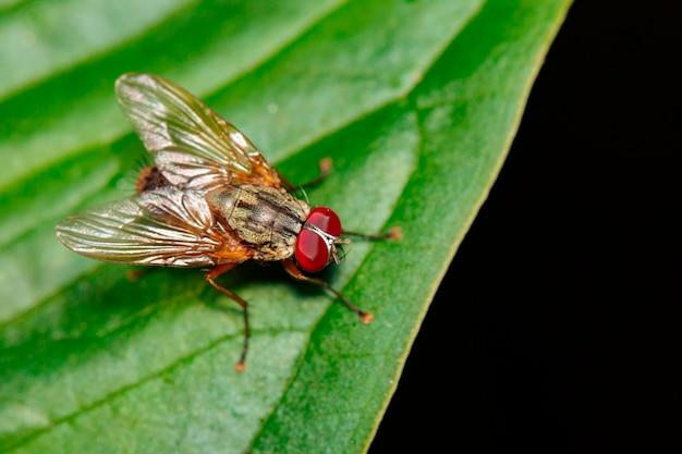 Obraz muchy (diptera) na zielonych liściach. owad. zwierzę