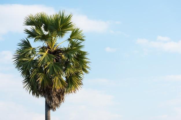Obraz palmy na tle nieba i przed chmurami.