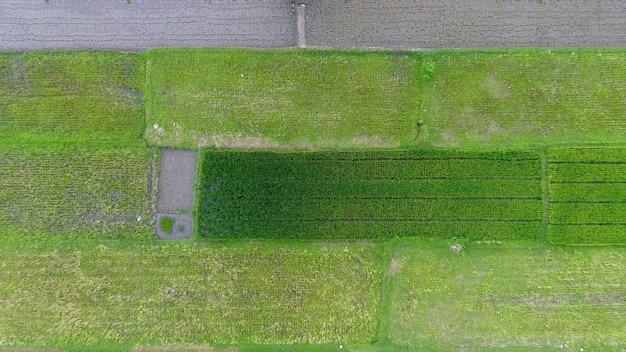 Obraz pięknego tarasowego pola ryżowego w sezonie wodnym i nawadniania z drona widok z góry ryżowego pola ryżowego na jawie w indonezji