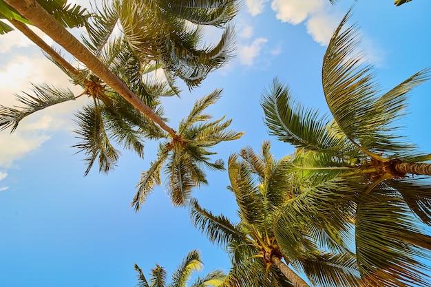 Obraz przedstawiający widok grupy palm na tle błękitnego nieba