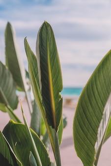 Obraz roślin i palm