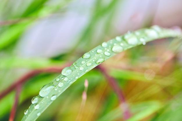 Obraz trawy pokrytej maleńkimi kroplami wody