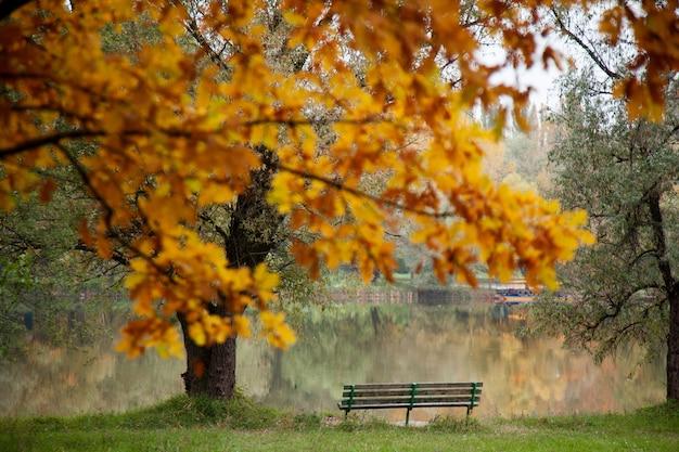 Obraz w parku z pustym miejscem w jesienny dzień