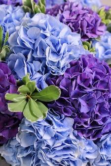 Obraz w tle bukiet hortensji z pitosporum. piękne niebiesko-fioletowe kwiaty w kwiatowej kompozycji. kwiatowy biznes. luksusowy romantyczny prezent dla dziewczyny na wakacjach.