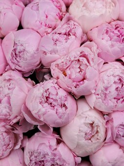 Obraz w tle bukiet jasnoróżowych piwonii luksusowe delikatne kwiaty na zbliżenie prezentu