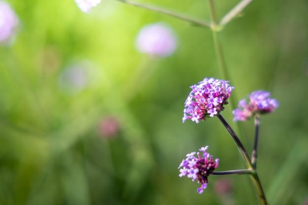 Obraz w tle kolorowych kwiatów, charakter tła