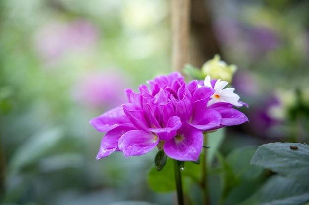 Obraz w tle kolorowych kwiatów