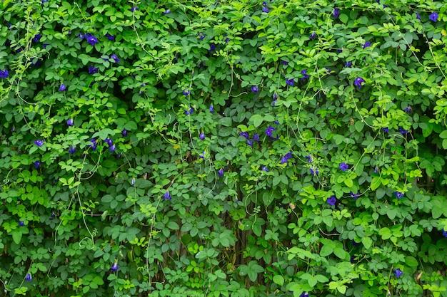 Obraz w tle świeżych zielonych liści w przyrodzie