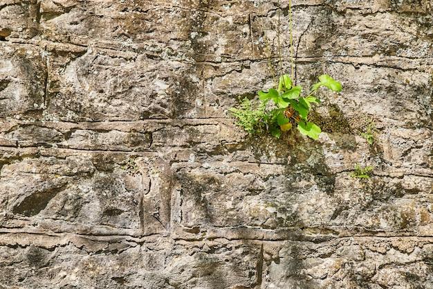 Obraz zielonej rośliny na sztucznej kamiennej ścianie z teksturą