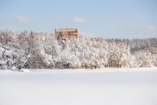 Obraz zimowych drzew ze śniegiem i błękitne niebo w ciągu dnia