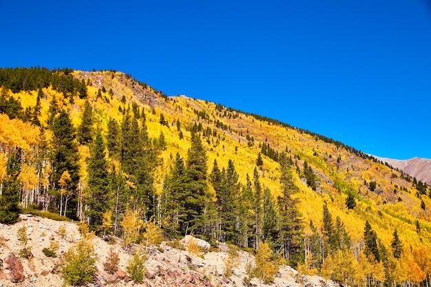 Obraz złotej żółtej osiki jesienią pokrywającej pasmo górskie