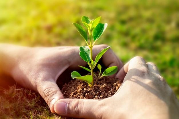Obrazek zielona roślina w ludzkich rękach.