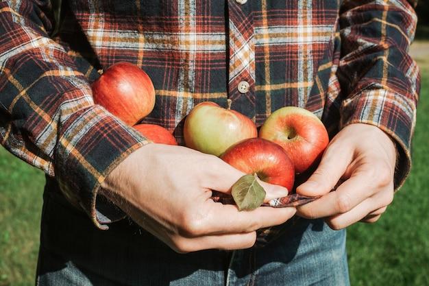 Obsługuje trzymać organicznie dojrzałych czerwonych jabłka w jego szkockiej kraty koszula, selekcyjna ostrość