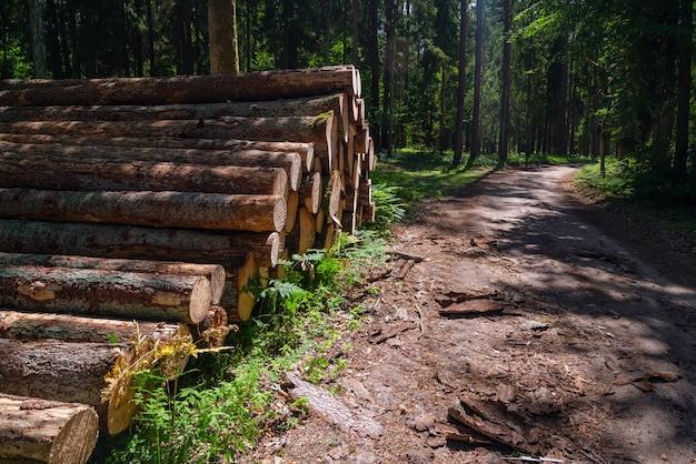 Obszar nielegalnego wylesiania roślinności leśnej, w pobliżu lasu stos ściętego drewna.