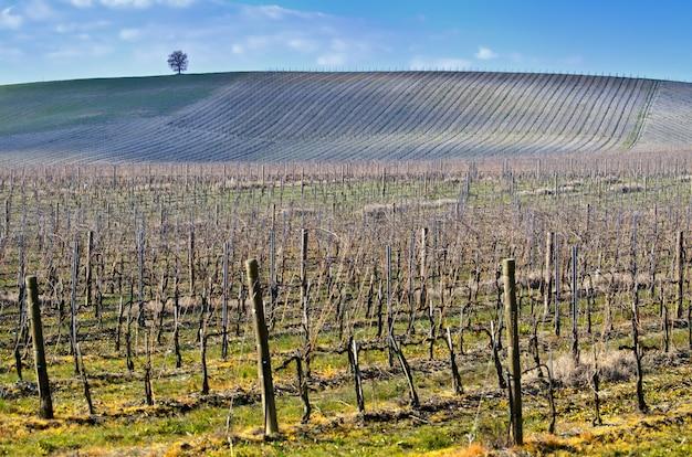 Obszar wiejski pokryty zielenią pod błękitnym niebem i światłem słonecznym w toskanii we włoszech