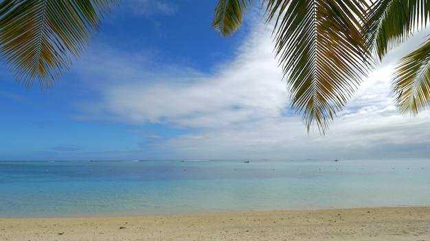 Ocean, plaża i gałęzie palmowe