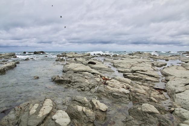 Ocean spokojny, kaikoura, nowa zelandia