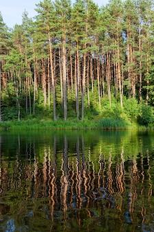 Odbicie drzew o nasyconych zielonych soczystych liściach w wodzie jeziora na brzegu którego rośliny te rosną blisko latem