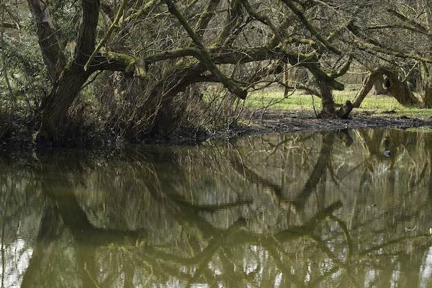 Odbicie drzewa na jeziorze w ciągu dnia