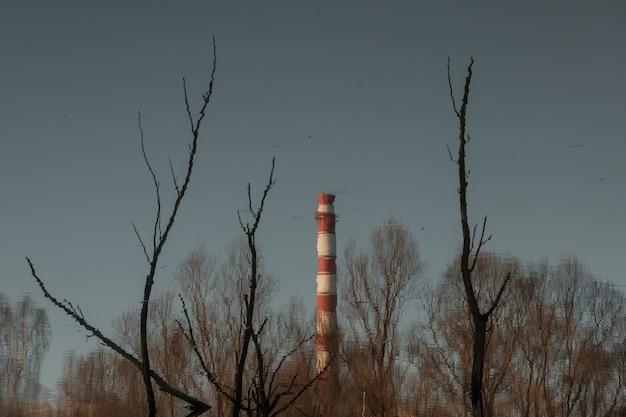 Odbicie fajki w wodzie wśród gałęzi drzew