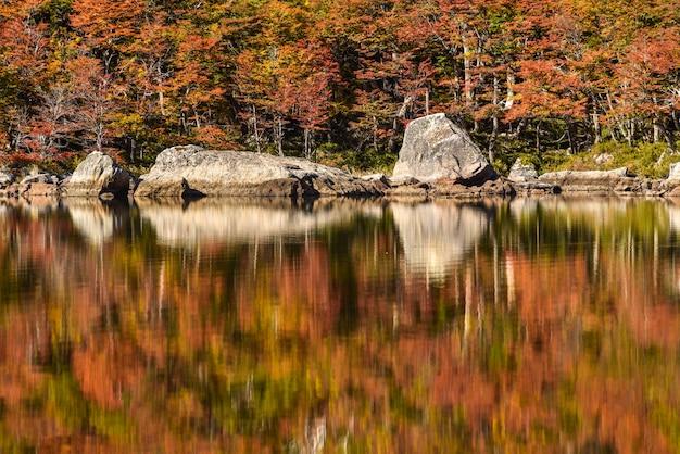 Odbicie jesieni drzewa w wodzie