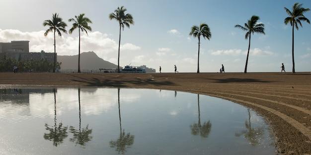 Odbicie palm w duke paoa kahanamoku lagoon, waikiki, honolulu, oahu, hawaje, usa