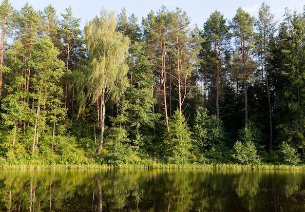 Odbicie w wodzie drzew rosnących nad jeziorem latem
