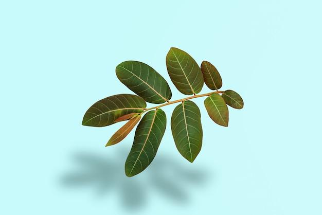 Odbicie zielonych liści w tropikalnym lesie na pastelowym zielonym tle