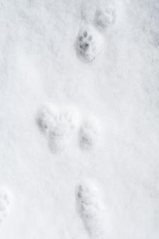 Odciski łap kota na śniegu.