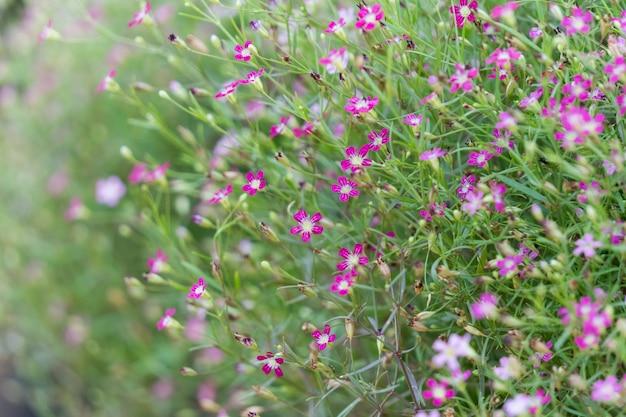 Oddech dziecka małe kwiaty w ogrodzie.