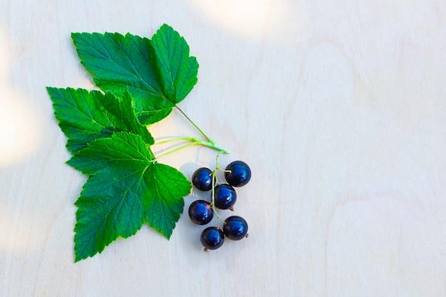 Oddział czarnej porzeczki z jagodami i liśćmi