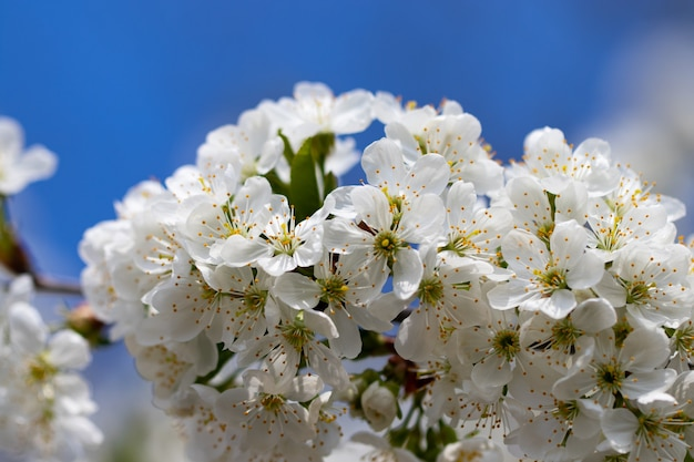 Oddział kwitnienia wiosny na tle błękitnego nieba.