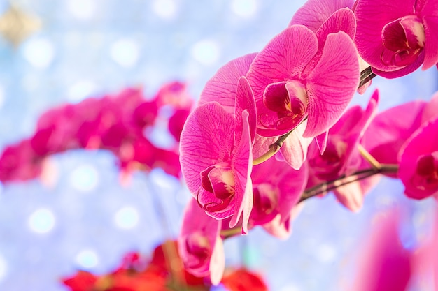 Oddział różowa orchidea