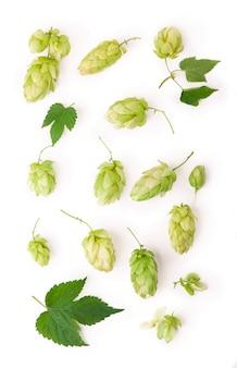 Oddział świeżych zielonych chmielu, na białym tle na białej powierzchni. szyszki chmielowe do wyrobu piwa i chleba. ścieśniać