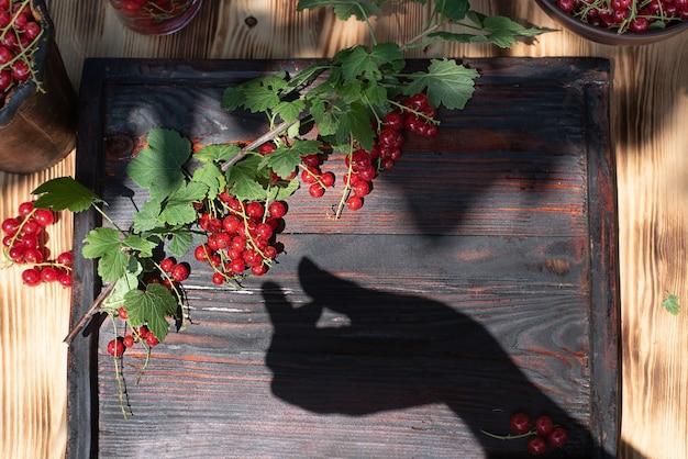 Oddział z dojrzałymi jagodami czerwonej porzeczki na drewnianej tacy z cieniem z kobiecej ręki, letnie jedzenie, z bliska.