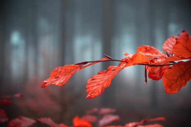 Oddział z pomarańczowymi liśćmi jesienią