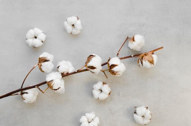 Odgórnego widoku bawełna kwitnie na sztukateryjnym tle
